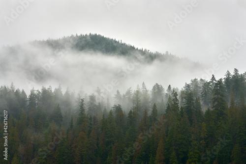 Canvas Print Pacific Northwest Forest Mist