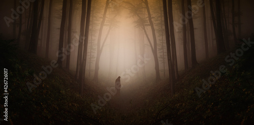 mysterious silhouette in haunted dark forest