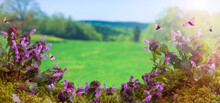 Spring Background. Purple Nettles In Spring Season