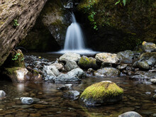 Merriman Creek Cascading At Merriman Falls In Lake Quinault Valley - Olympic Peninsula, WA, USA