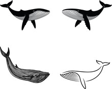 Design About Whale And Fish With Transparent Background