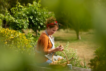 Woman Looking At Fresh Harvested Vegetables In Sunny Summer Garden