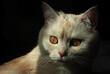 Zapatrzony kot