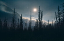 Silhouette Of Spruce At Night Sky With Full Moon