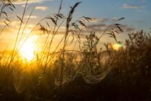 Spider Web At Dawn