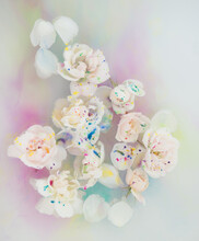 Close-up Of White Roses Floating In Water, Milk And Aquarelle Colors