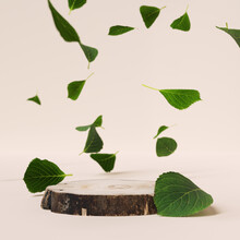 Wooden Platform And Falling Leaves, Cylindrical Piece Of Wood Minimalistic Background For Organic Natural Product Presentation 3d Rendering