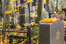 Autumn Jewish Cemetery. A Yellow Maple Leaf Is Lying On A Cemetery Plate With An Engraved Star Of David.