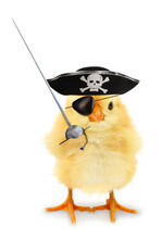 Cute Cool Chick Pirate Privateer With Sabre Funny Conceptual Image