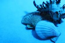 水中の貝殻