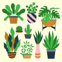 House Plants. Potted Plants Collection. Home Houseplant Flowerpot. Urban Or House Plants. House Indoor Plant Set. Decorative  Botanical Floral Garden. Growing Different Flowers. Vector Illustration.