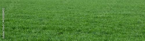 Fotografía background of green grass field