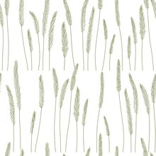 Image Of Spikelets On A White Background, Pattern. Spikelets In Beige Color. Bitmap Illustration. Design For Wallpaper, Fabrics, Textiles.