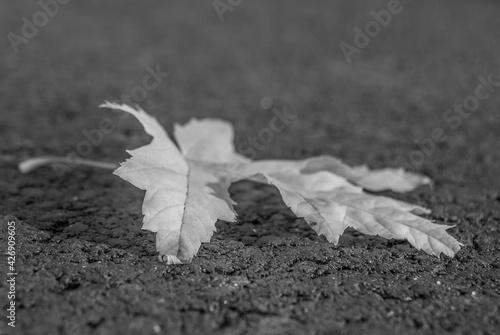 Fototapeta jesienny liść 2 obraz