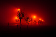 Trees Along The Track, In The Fog, Illuminated By Red Lights, Mysticism