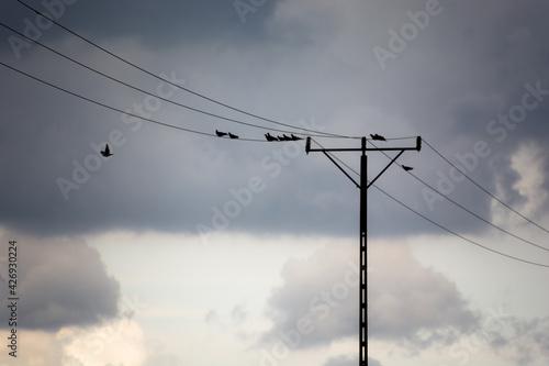 Fototapeta sylwetka słupa energetycznego na tle nieba, ptaki siedzące na przewodach obraz