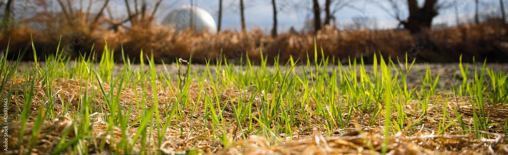 Fototapeta Wiosenna trawa na tle brzegu rzecznego