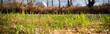 Wiosenna trawa na tle brzegu rzecznego