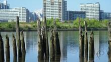 川の中の芸術的な朽ち木の向こうにボート釣り人の背景ぼかした映像