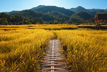 Rice Field And Boon Kho Koo So Bamboo Bridge In Mae Hong Son Thailand