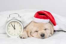 Golden Retriever Puppy Wearing Red Santas Hat Sleeps With Alarm Clock Under White Warm Blanket On A Bed At Home