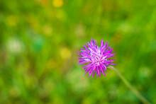 Beautiful Purple Wild Flowers In The Nature