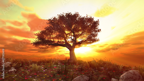 tree spring in meadow sunset
