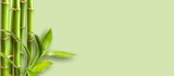 Green bamboo branches on green background space for text