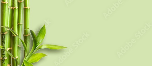 Photo Green bamboo branches on green background space for text