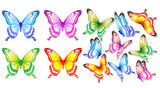 butterfly787
