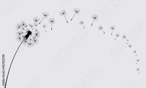 Valokuva Dandelions on the cream background. Vector dandelion