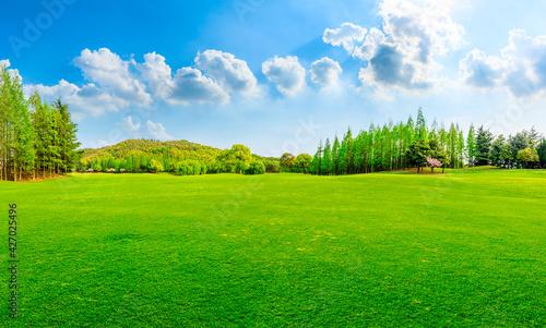 Obraz na płótnie Green grass and forest in spring season.