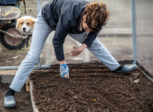The Girl Sows Seeds In The Ground
