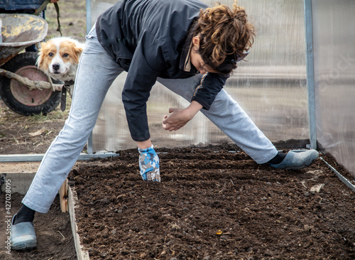Fotografie, Obraz The girl sows seeds in the ground