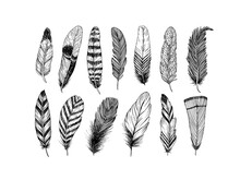 Hand Drawn Black Fluffy Feathers. Vector Black And White Ink Sketch Illustration. Ethnic Boho Style Hand Drawing. Rustic Feathers Collection. Realistic Graphic Style With Scratched Lines.