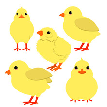 Vector Set Little Chick In Different Positions