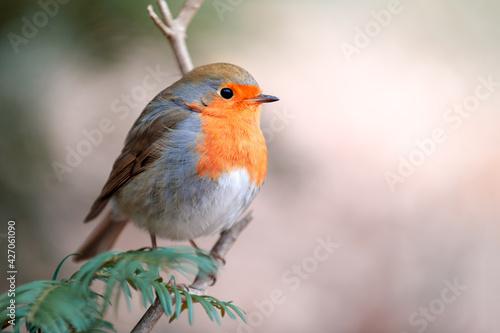 Fotografie, Obraz common robin