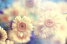 Rain Glass Flowers Background Abstract Spring Blurred Seasonal Floral