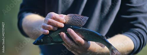 Fotografía caught European grayling, tackle and fishing, fishing net, wild freshwater river