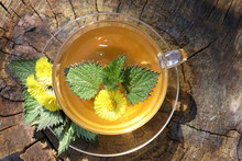 A Cup Of Healing Herbal Tea For A Stronger Immune System With Spring Coltsfoot Flower On Wooden Stump Background With Medicinal Plants Tussilago Farfara And Nettle. Top View. Flat Lay