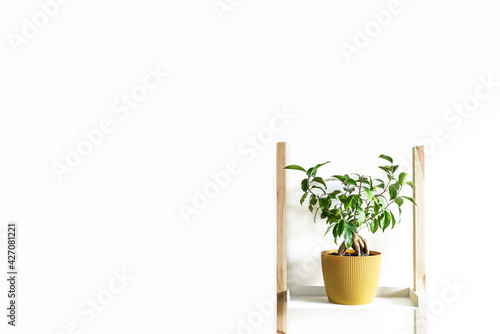 Obraz Minimalist home decor, decorative plant, interior background - fototapety do salonu