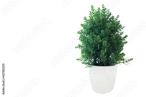 Fototapeta Mini green tree bush potted plant, green leaves fake plant in white pot for indoors room decor isolated on white background with clipping path