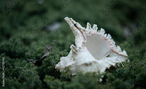 Obraz na plátně Still life with seashell in green bush