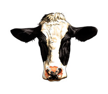 Black And White Cow Head Portrait From A Splash Of Watercolor, Colored Drawing, Realistic. Vector Illustration Of Paints