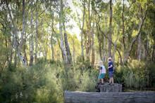 Little Boys Standing On Large Cut Off Tree Trunk In Beautiful Australian Bushland