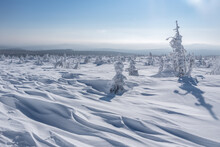 A Snowy Plateau, Drifts And Spruce Trees Of Bizarre Shapes In The Snow After A Blizzard On A Bright Sunny Day. Magical Winter Landscape