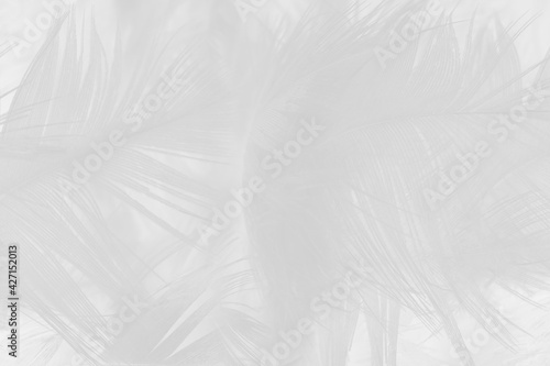 Fotografie, Obraz white feather wooly pattern texture background