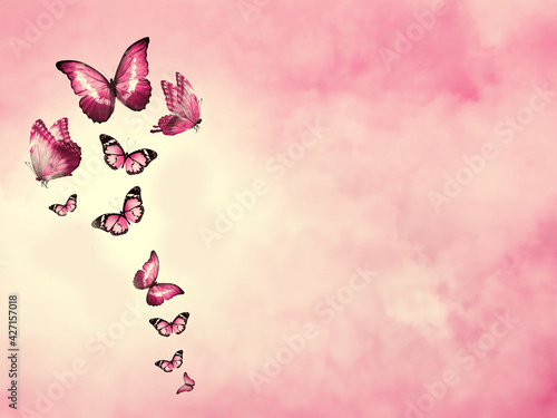 Fotografia, Obraz Color sky with clouds and butterflies as background