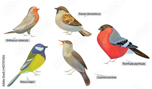 Photographie Set with different winter birds living in North  America and Europe