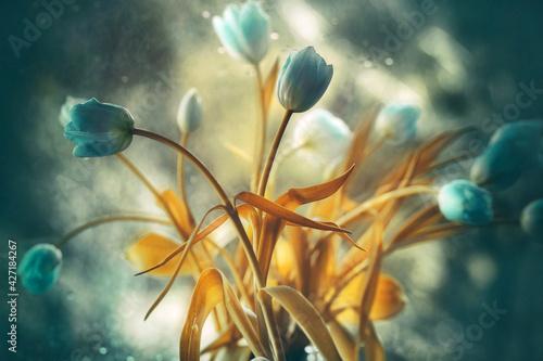 Fototapeta Tulipany Tulips obraz
